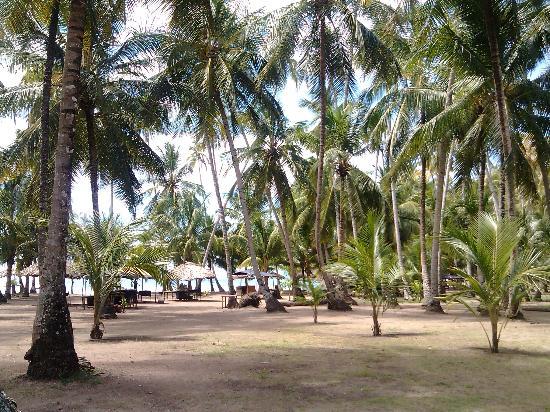 Playa Medina : Sus Palmeras