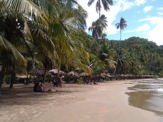 Playa Medina y sus palmeras