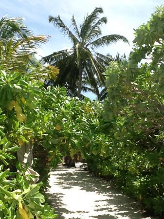 Six Senses Laamu: Blick vom Meer in Richtung eigener Villa
