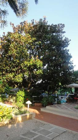 Alpha Hotel: Le jardin