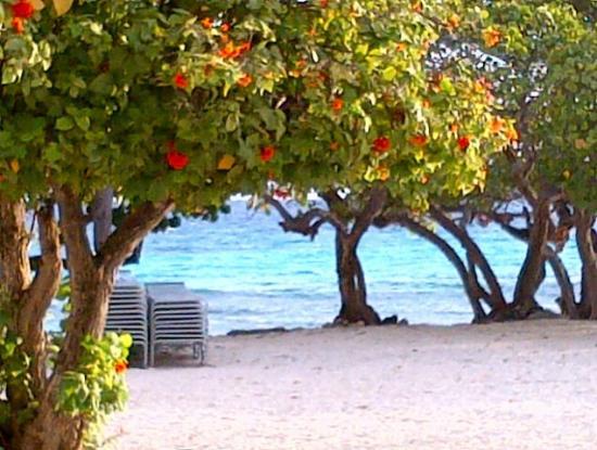 Sapphire Beach Resort: Beautiful beach