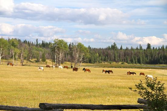Siwash Lake Wilderness Resort: Horses grazing just off the back deck