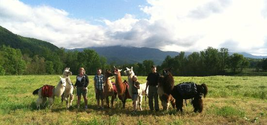 Smoky Mountain Llama Treks - Day Tours