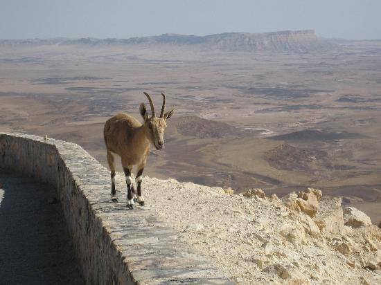 Israel: Negev Desert