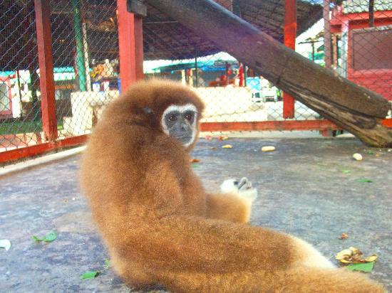 Thonburi Snake Farm (Bangkok, Thailand): Top Tips Before You Go - TripAdvisor
