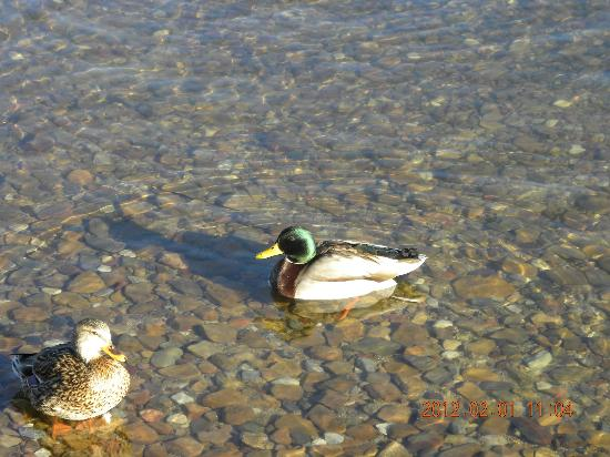 Lagonita Lodge: The Clear Water of the Big Bear Lake with Ducks Swimming