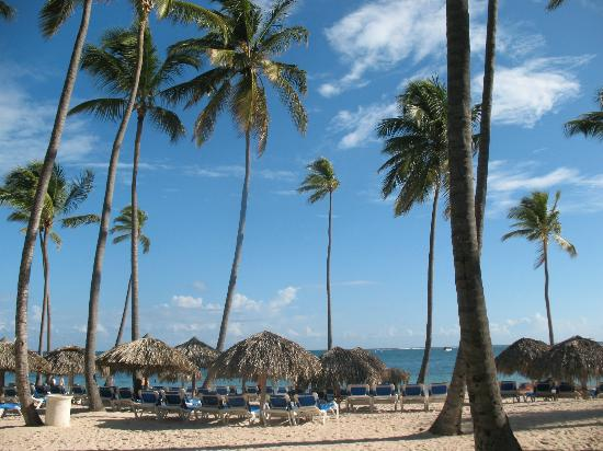 Dreams Palm Beach Punta Cana: palm trees on beach
