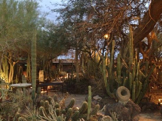 BeDillon`s Restaurant & Cactus Garden: wonderful cactus garden