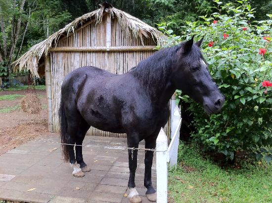 Foundation Jaguar Rescue Center: beautiful black horse