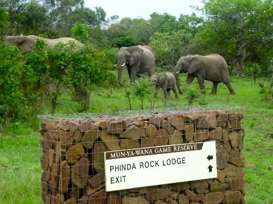 andBeyond Phinda Rock Lodge: Elephants everywhere!