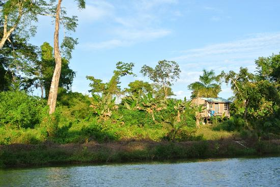 Black Orchid Resort: View while kayaking the Belize River