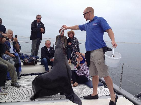 Catamaran Charters: Introducing the sea lion