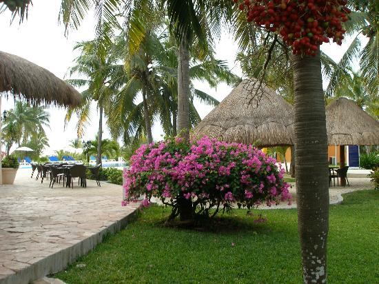 Ocean Maya Royale: gounds