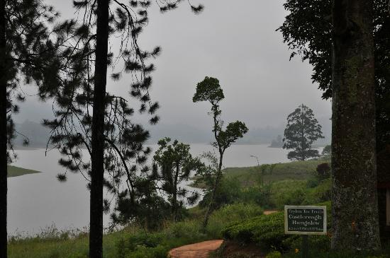 Ceylon Tea Trails: View