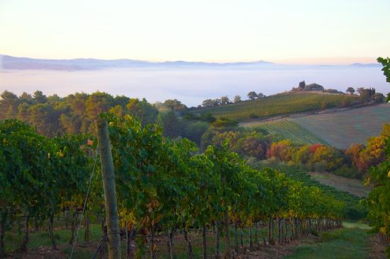 Castello Banfi - Il Borgo: Banfi at Dawn
