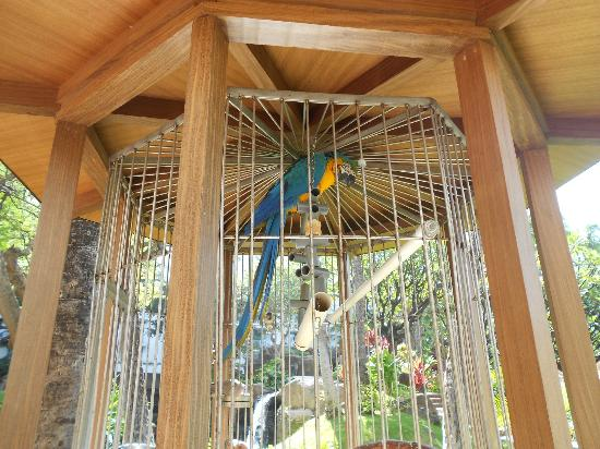 Westin Maui Resort And Spa: really cool parrots there, they also talk.