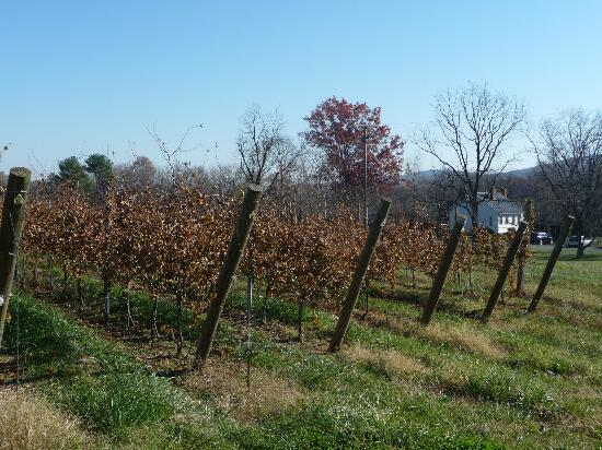 The 1804 Inn of Barboursville Vineyards: A glimpse of Blue Run Cottage through the vines