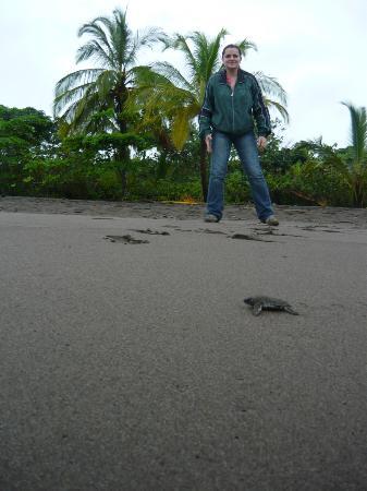 Pachira Lodge: Visita a la playa de Tortuguero