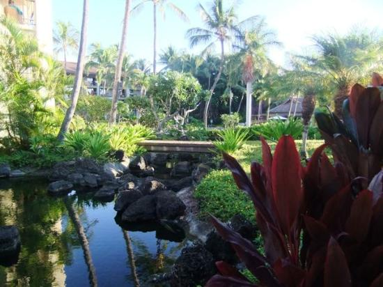Sheraton Kauai Resort: lovely gardens and ponds throughout the property.