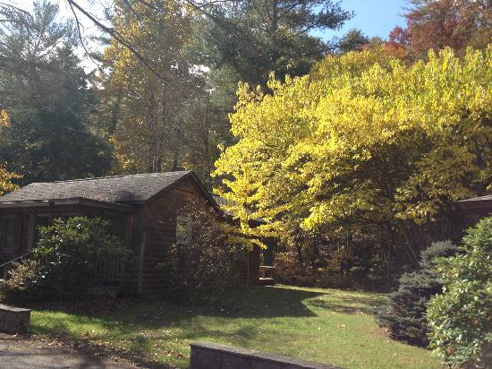 Brookside Cabins: Exterior foliage