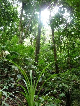 Mossman Gorge: In the forest