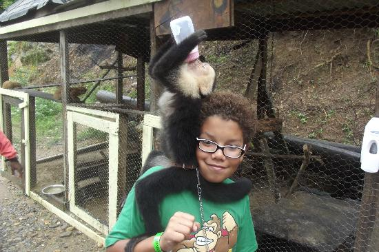 Jungle Top Zipline Adventure: Ares and Diego the Capuchin