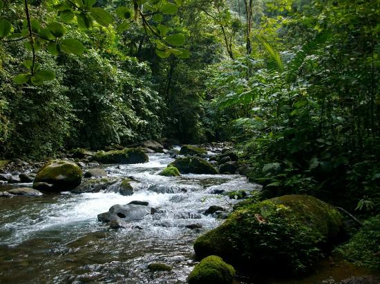 Arenal Birdsong VIlla : Stream at the base of the waterfall on the Birdsong property