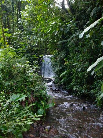 Arenal Birdsong VIlla : Waterfall on the Birdsong property