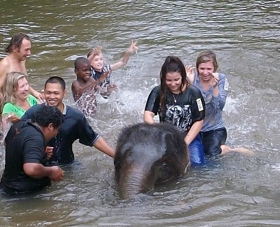 Pahang, Malaysia: Bathing the Elephants!