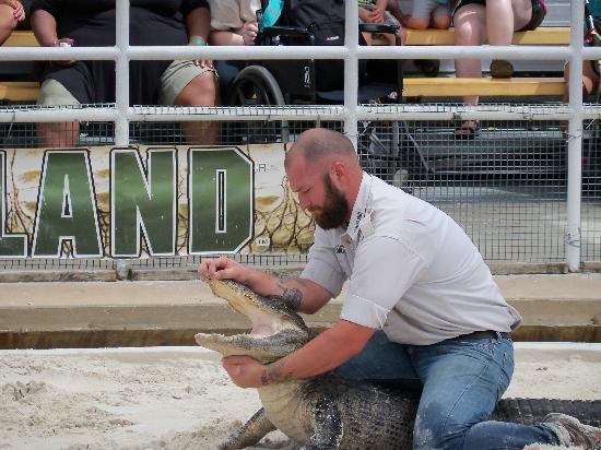Gatorland : Gator Wrestling