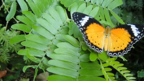 The Lodge and Spa at Callaway Gardens: Butterfly