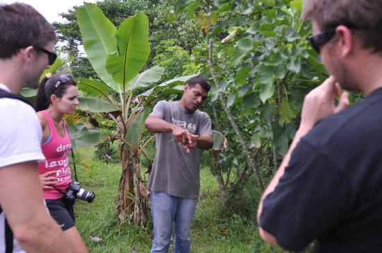 Naveria Heights Lodge Tours: Vanilla bean farm