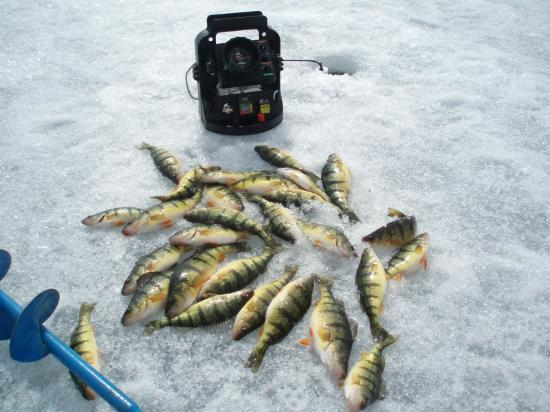 Roosters Diner : Lake Couchiching perch