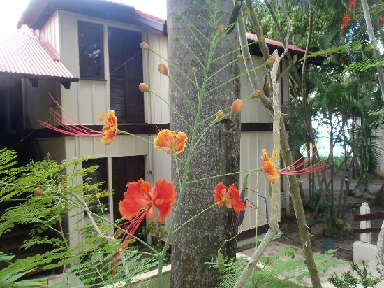 Renaissance St. Croix Carambola Beach Resort & Spa: flowers outside bungalow
