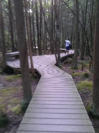 White Cedar Swamp: the walkway