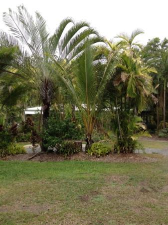 BIG4 Port Douglas Glengarry Holiday Park: super green