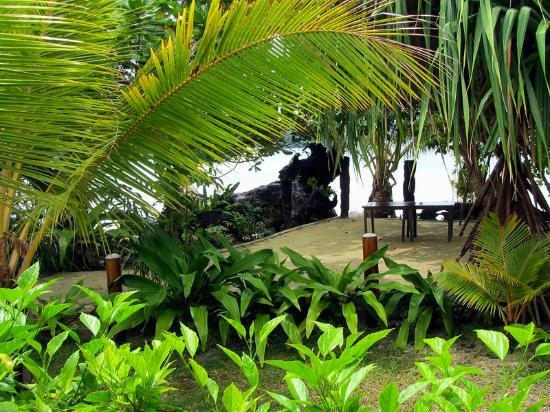 Turtle Bay Lodge: Tropical garden