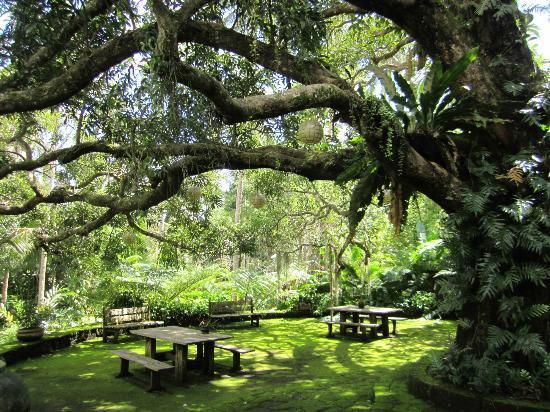 ذا فارم آت سان بينيتو: Mango Tree 