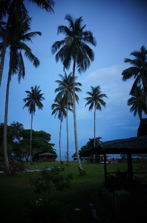 Fishing Bay Resort: coconut tree