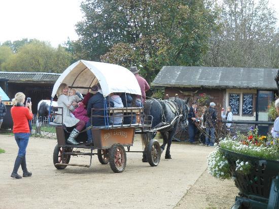 Dorset Heavy Horse Farm Park: dorest heavy horse farm park