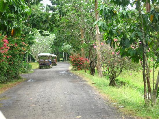 Museum Picture Of Villa Escudero Tiaong Tripadvisor