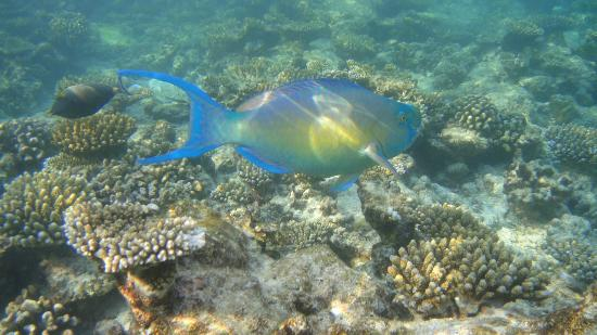 Ellaidhoo Maldives by Cinnamon: One of many beautiful fish that you can spot