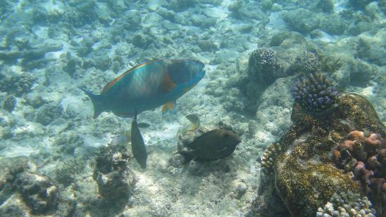 Ellaidhoo Maldives by Cinnamon: another snorkelling photo