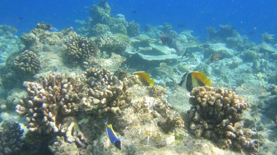 Ellaidhoo Maldives by Cinnamon: at the edge of the reef