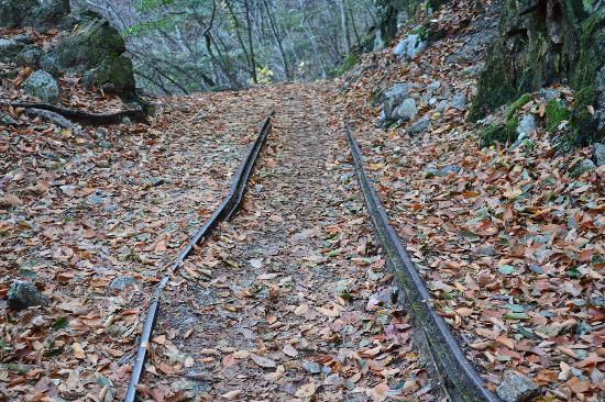 Nishizawa Canyon: 森林鉄道跡