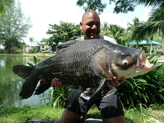 Hua Hin Fishing Lodge: first time this beautiful carp's been caught in 2 years ...