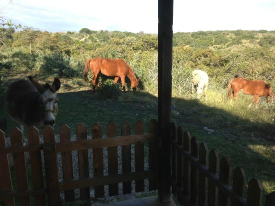 Quiet Hill Ranch - Fredericksburg: AM view from our cabin.... Awesome!