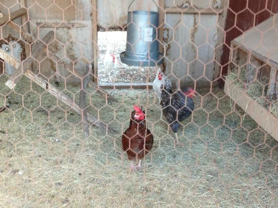 Quiet Hill Ranch - Fredericksburg: Chicken coop