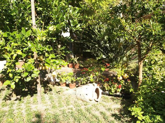 Relais Villa Angiolina: Garden