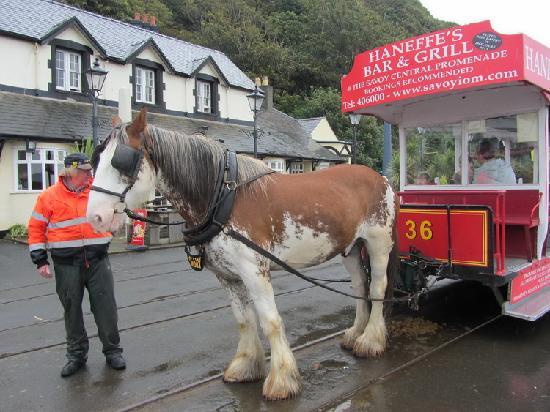 Douglas Bay Horse Tramway: One of the beautiful horses